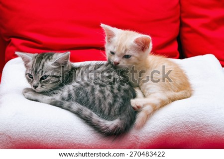 Small kittens are going to sleep on a soft blanket - stock photo
