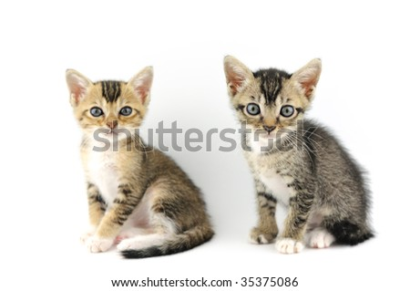 Small kittens over white background