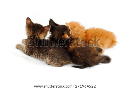 small kittens shot from behind - stock photo
