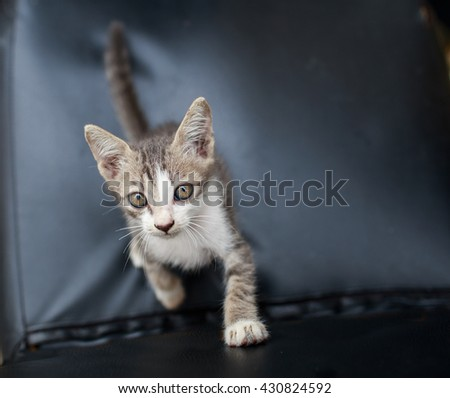 Small kittens wants to play - stock photo