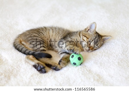 Small Kitty - stock photo