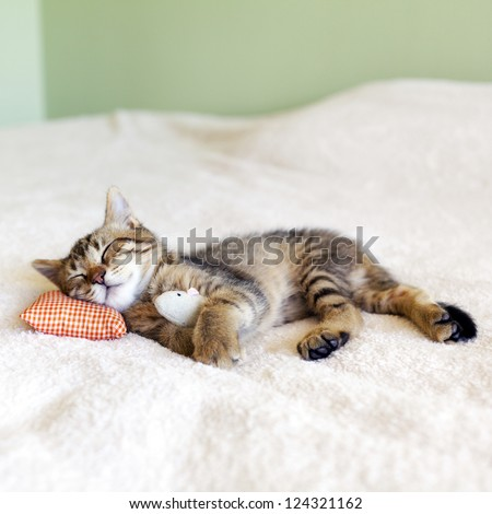 Small Kitty With Red Pillow and Mouse - stock photo