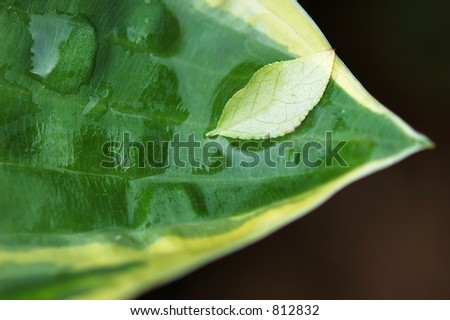 Small leaf held by large leaf - stock photo