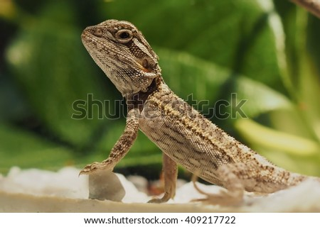 small lizard in jungle