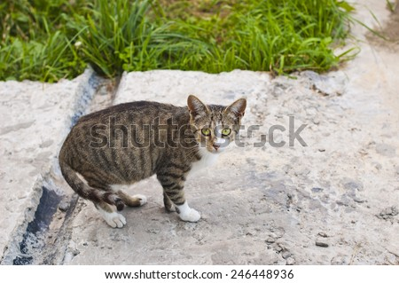 Small lonely cat  - stock photo