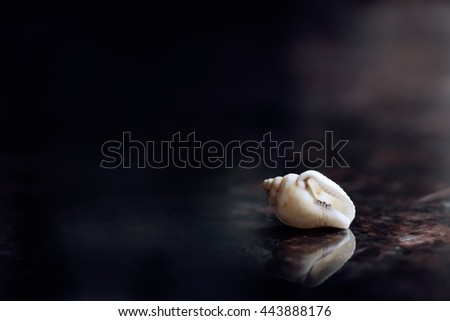 Small marine sea shell dark blue background - stock photo