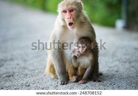 small monkey and his mother - stock photo