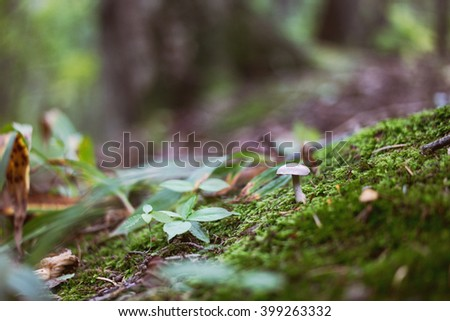 small mushroom with unfocused field of grass,vintage tone, bokeh - stock photo