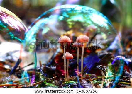 small mushrooms mold - stock photo