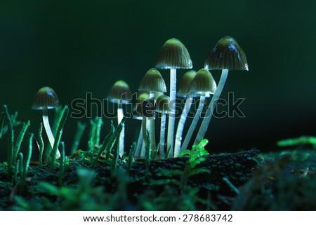 small mushrooms toadstools macro microcosm - stock photo