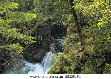 Small natural spring waterfall in a wood of Rocky Mountains (British Columbia. Canada)