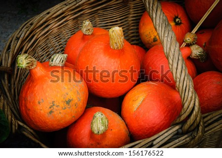 Small orange gourds in a wicker basket.  Fresh organic produce from a local farmers market in Paris. - stock photo