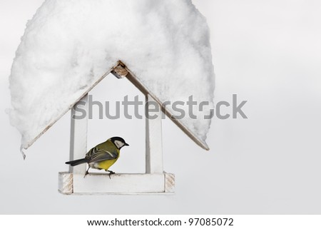 small parus on feedbox close up - stock photo