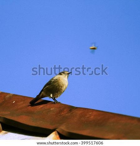 Small passerine bird illuminated by the low sun just before sunset sitting on the roof and watching its prey small flying hoverfly with blue sky in the background. Wildlife photography. - stock photo