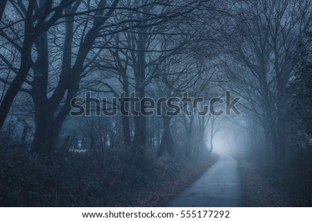 small path in a winter evening