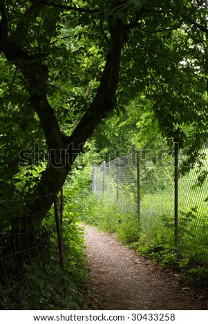 small path through forest - stock photo