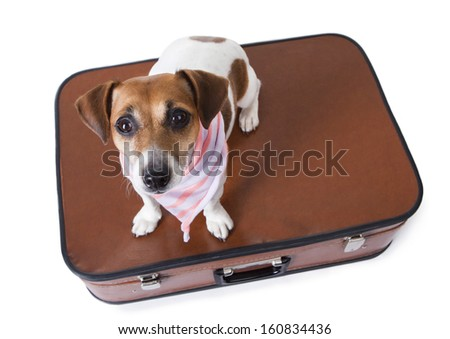Small pet dog sits in a closed suitcase in a stylish pink striped scarf and looking at the camera bottom. This leads to a journey with you.  White background