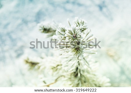 Small pine with hoarfrost in winter forest. Selective focus. Beautiful winter landscape - stock photo