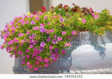 Small pink flowers pot stock photo image royalty free 599501192 small pink flowers in a pot mightylinksfo
