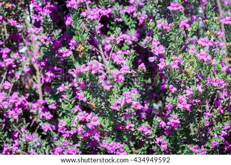 Small pink flowers on bush in a summer garden - stock photo