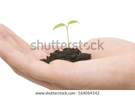 small plant and hand over white background - stock photo