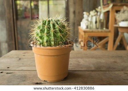 Small plant cactus and desert flora in flower pot on wooden table and garden background in warm tone/Small plant in flower pot in warm tone - stock photo