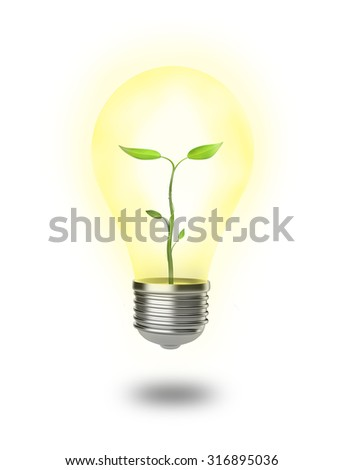 Small plant growing in a shining light bulb