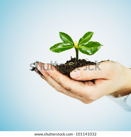 Small plant growing in the human hands. - stock photo