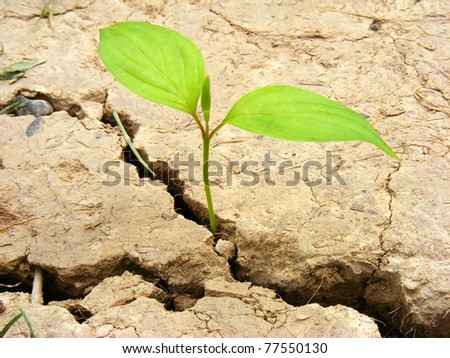 Small plant in a cracked soil. LIfe concept.