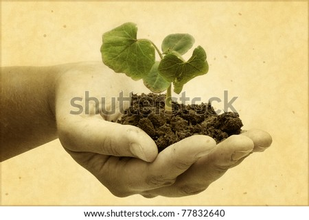 Small plant in a hand - stock photo