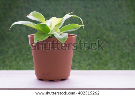 Small plant in brown flower pot on wooden table and grass wall background/Small plant in flower pot - stock photo