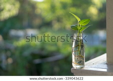 Small plant in recycle bottle