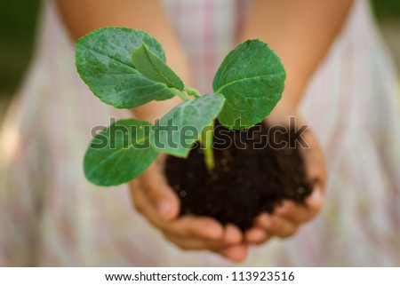 Small plant in the palm of a child - stock photo
