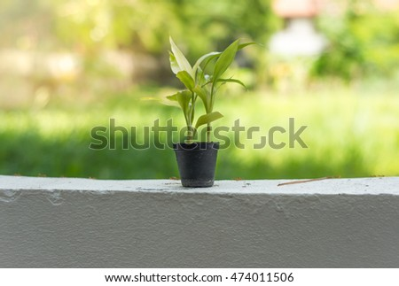Small Plant in the pots with flare light and blur beautiful background nature.