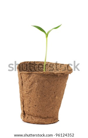 Small plant isolated over white background