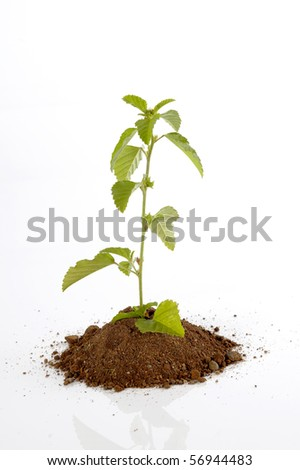 Small plant on the soil, shoot in studio, isolated on white background