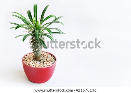 Small plant pot on white background. Copy space - stock photo