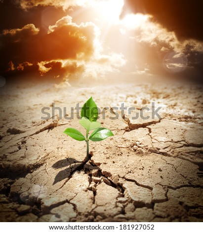 small plant that grows in arid land - concept climate warming  - stock photo
