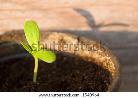 small plant under afternoon sun - stock photo
