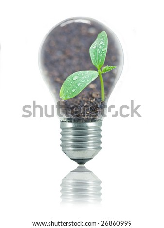 Small plant with water drops and relfection of sunshine in a light bulb isolated on white to represent eco friendly energy - stock photo