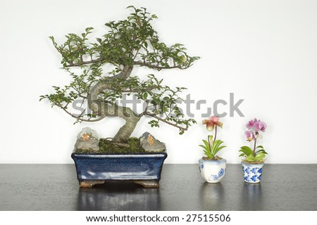 Small plants lines up on table - stock photo
