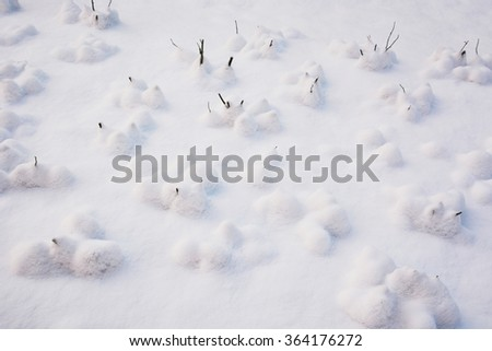 Small plants under the snow - stock photo
