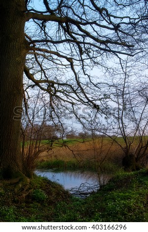 small pond at the edge of forest, first spring green and white wood anemones below the bare trees, vertical - stock photo