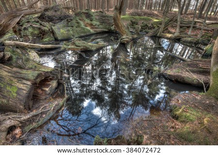 Small pool in a forest partly filled with fallen, rotting trees - stock photo