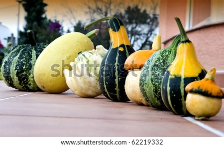 Small pumpkins on terrace