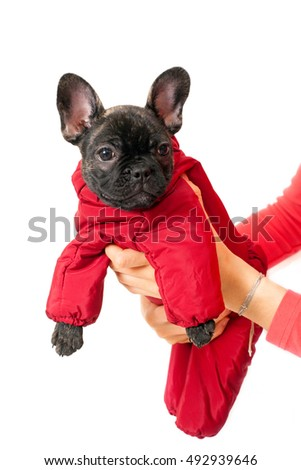 Small puppy in a red dress