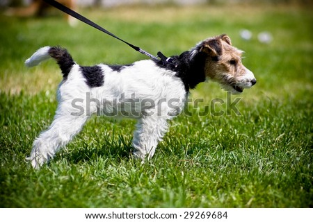 Small puppy in park - stock photo