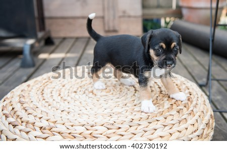 Small Puppy Playing on Woven Ottoman Outside on Wooden Deck - stock photo