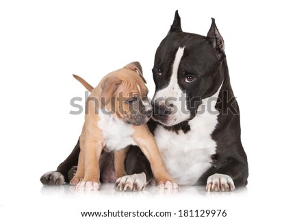 small puppy playing with mother  - stock photo