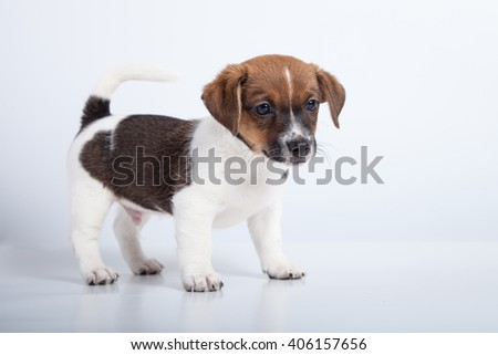 small puppy stand at white background
